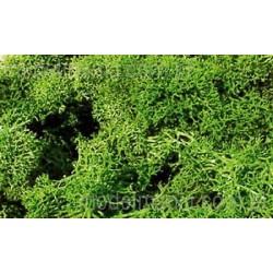 Mech jasno-zielony / 30g Heki 3210